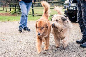 Tierphysiotherapie Kandertal - Hunde