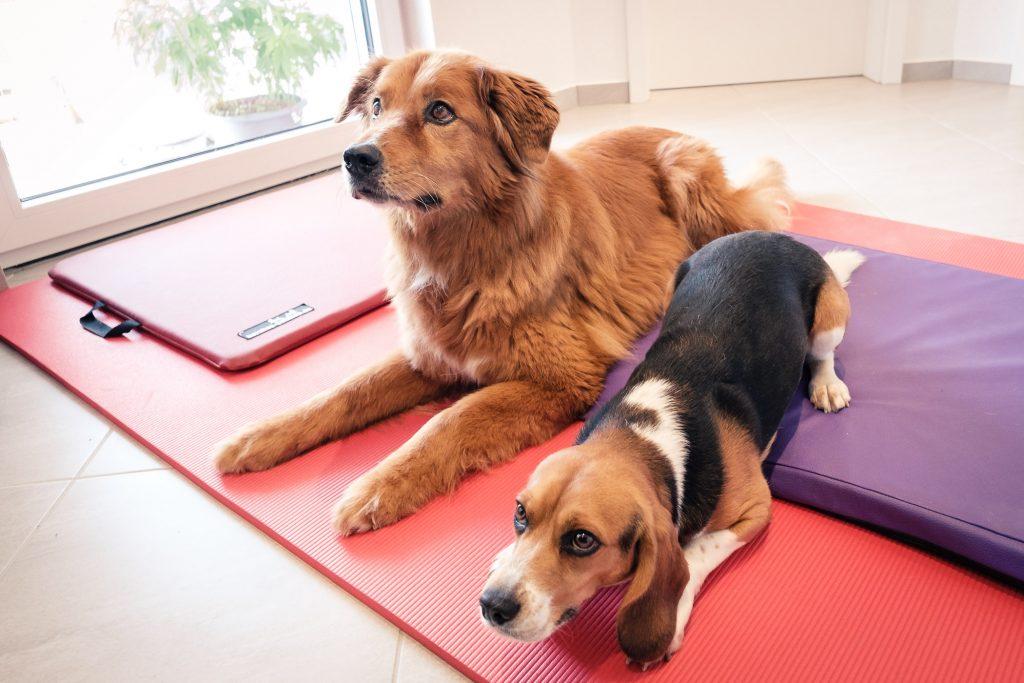 Tierphysiotherapie Kandertal - Hunde Physiotherapie