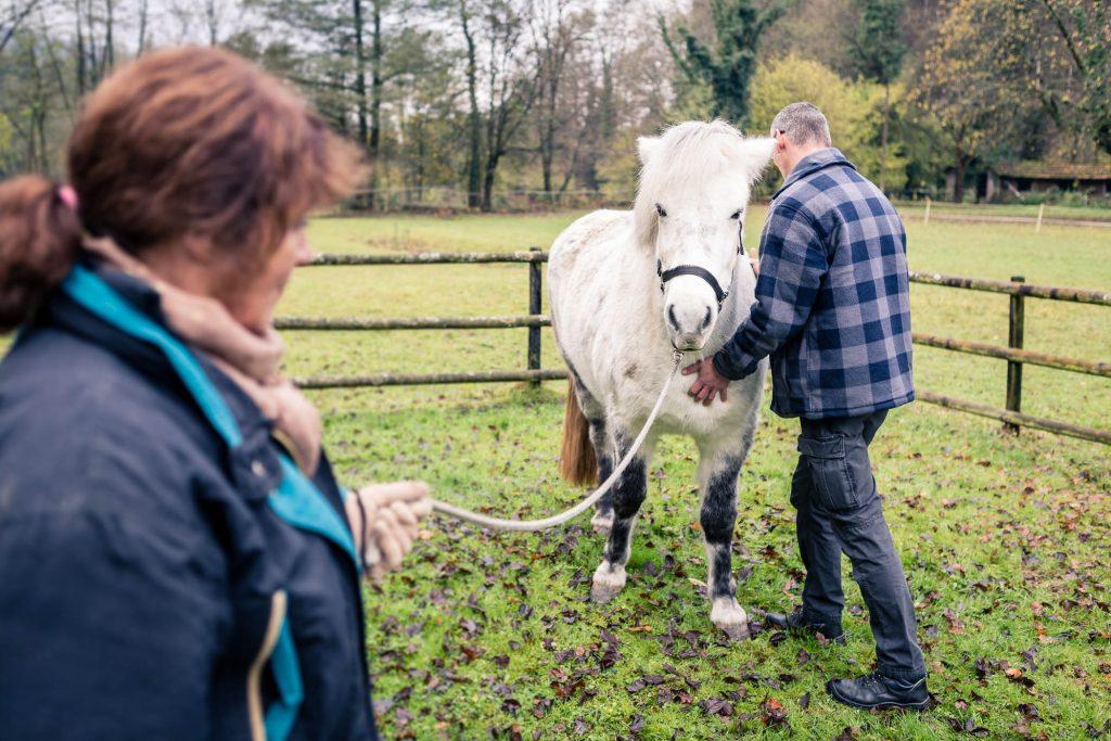 Tierphysiotherapie Kandertal - Behandlung Pferd