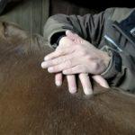 Massage am Pferd – ein Seminar mit Pferdephysiotherapeut Thorsten Hachmann am 10.05.2020