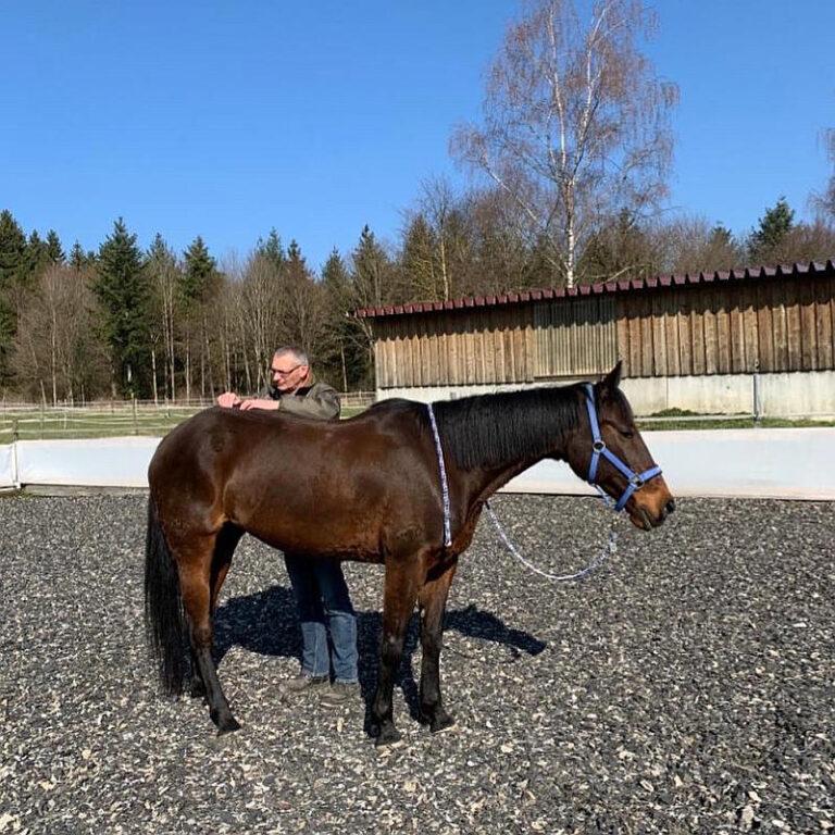 Thorsten Hachmann Pferd