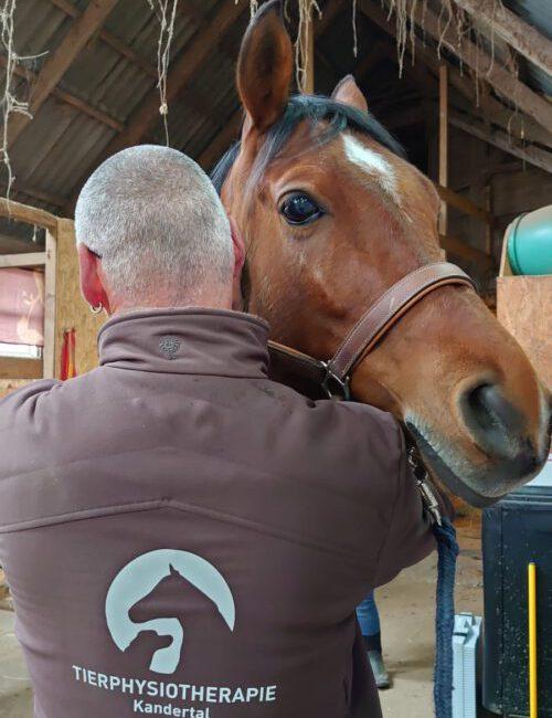 Physiotherapie Kandertal Pferd